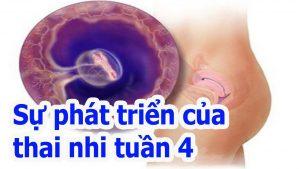 Phá thai 4 tuần tuổi và các bước phát triển của thai nhi giai đoạn này